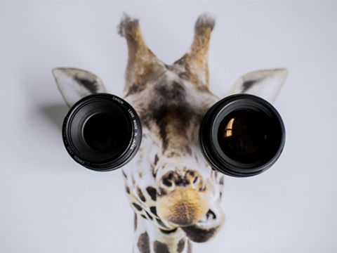 Une histoire de girafe, accompagnement, james bold, unsplash