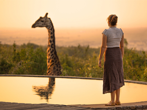 Une histoire de girafe, investissement, robin stuart, unsplash